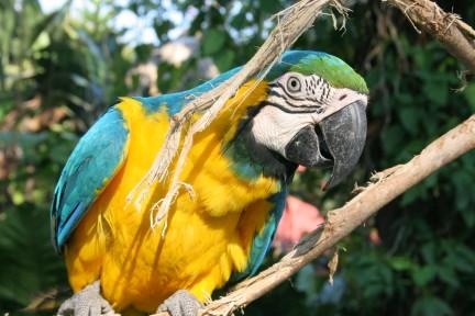 guatemala bird