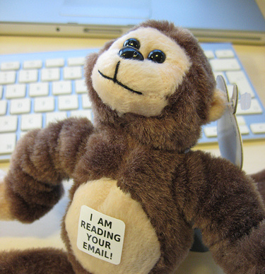 monkey reading your email